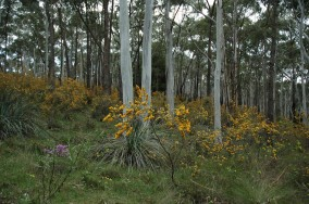Wildflower walks through the Candlebark Woodlands are nearly as popular as the Sinclair's Gully wines