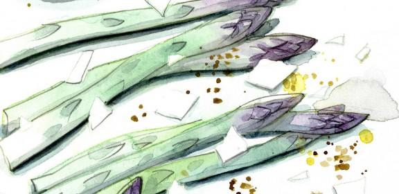 asparagus-web